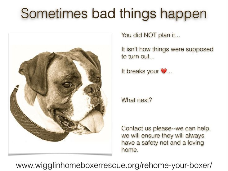 Make the right choice when it comes to rehoming, stick to rescues and stay away from Craigslist!! https://form.jotform.com/61638524327155  #boxer #wigglebutt #rescue #boxerrescue #adoptdontshop #savealife #foster #fosterdog #dogs #rescuedog #dotherightthing