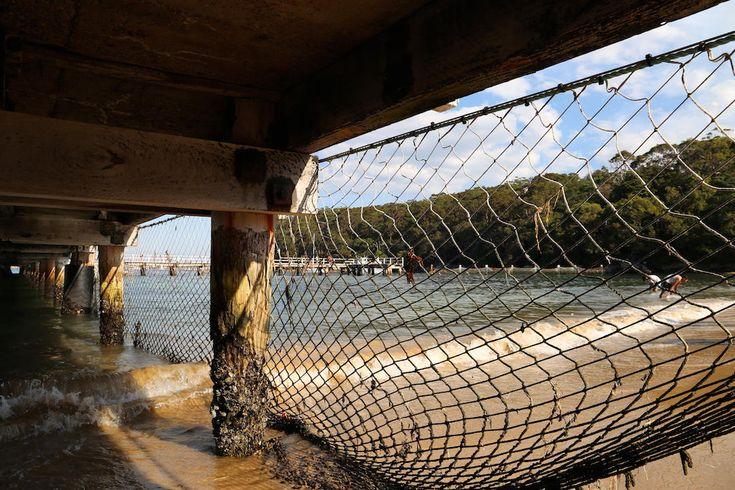 Shark net, Clifton Reserve and Beach, Mosman, Sydney