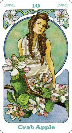 Bach Flower Inspirational Cards - Google keresés