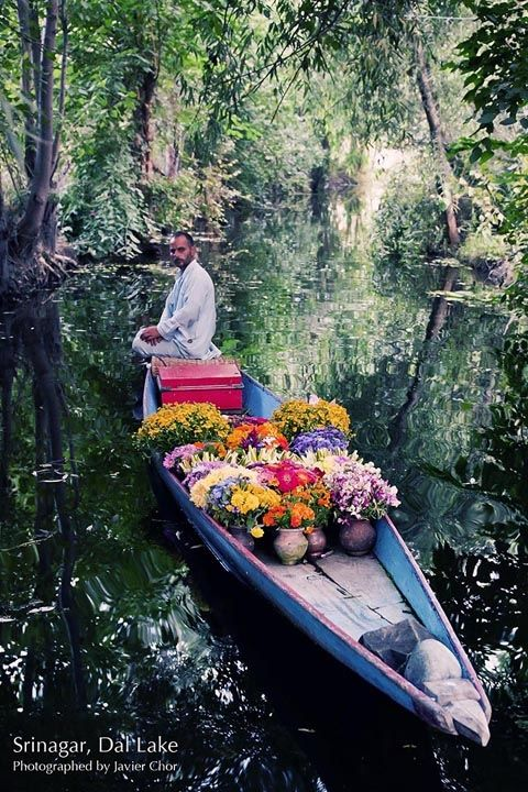 A man selling fresh flowers on a shikara (small boat) in the Dal Lake, Srinagar, Kashmir - India