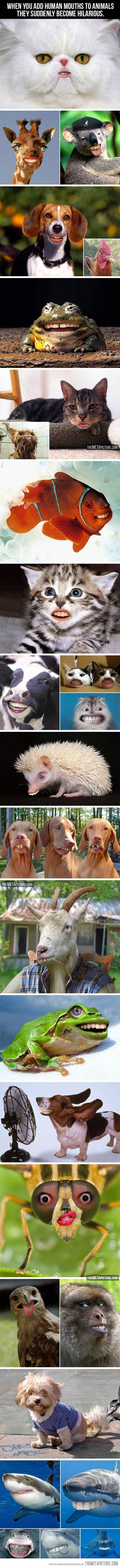 Animals With Human Mouths…