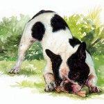 Corretta alimentazione del cane (Disegno di Gabriella Gallerani)