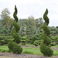 выбор растений разных форм: ниваки, карикоми, топиары, живые изгороди, контейнерные растения