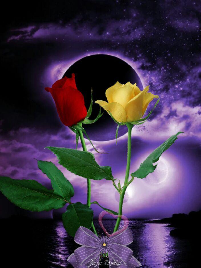 Доброй ночи цветы картинки с надписями красивые, прикольные