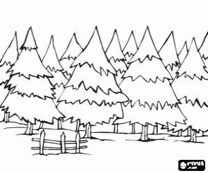 Omalovánka Jedlové lesy
