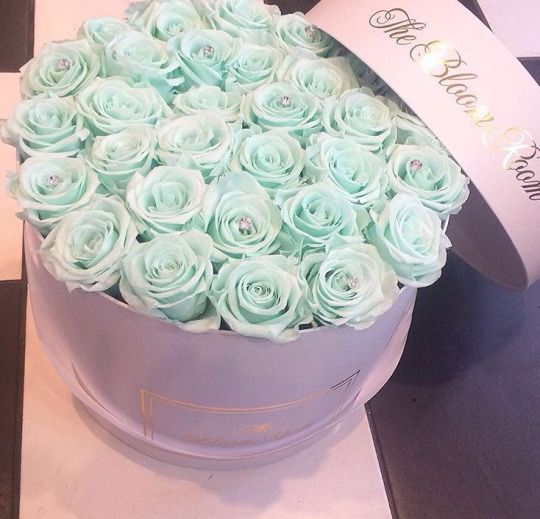 the bloom room, daisy, rosy, blue roses, luxury, cute, lovely, valentines day, relationship goals