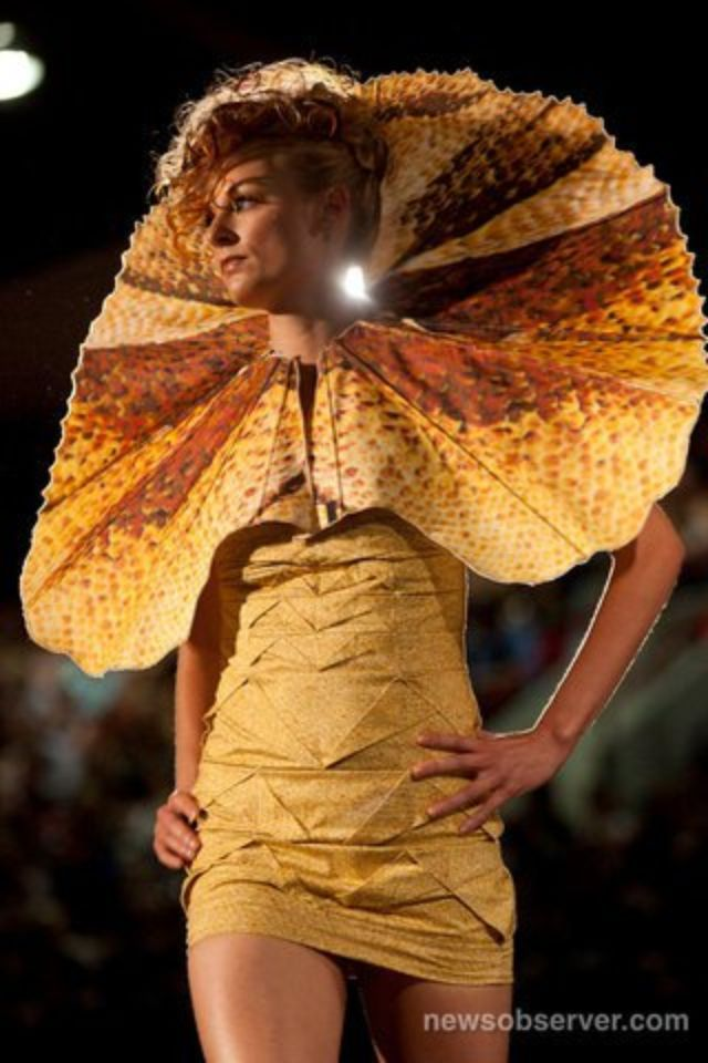 26 Best Images About Frilled Lizard Expressive On Pinterest
