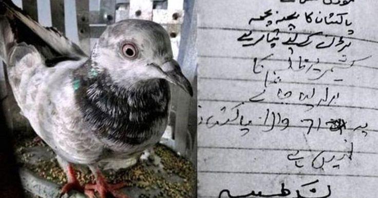 A curiosa história das pombas presas na Índia sob acusação de serem 'espiãs'