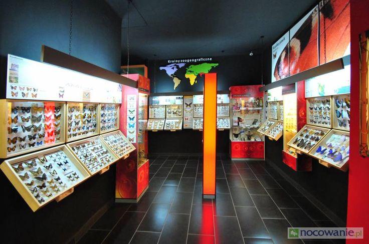Pomysł na weekend - Muzeum Motyli we Władysławowie, w którym można podziwiać gatunki z całego świata! Więcej na: http://www.nocowanie.pl/noclegi/wladyslawowo/muzea/61706/