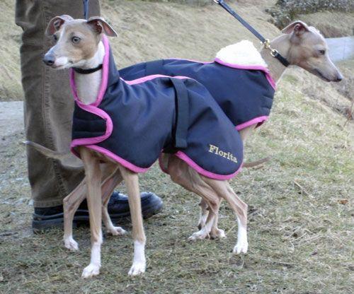 Dog Coats - Italian Greyhound Coats : Waterproof Made to Measure Italian Greyhound Coat