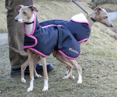 Dog Coats - Italian Greyhound Coats : Waterproof Made to Measure Italian Greyhound Coat