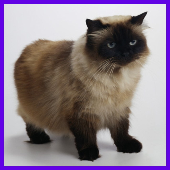 kitty kittens I miss people Tabby!! felines cutecat cat