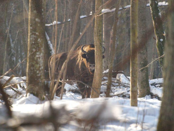 in the Białowieża Forest; Białowieża Biodiversity Academy www.WEJMUTKA.pl
