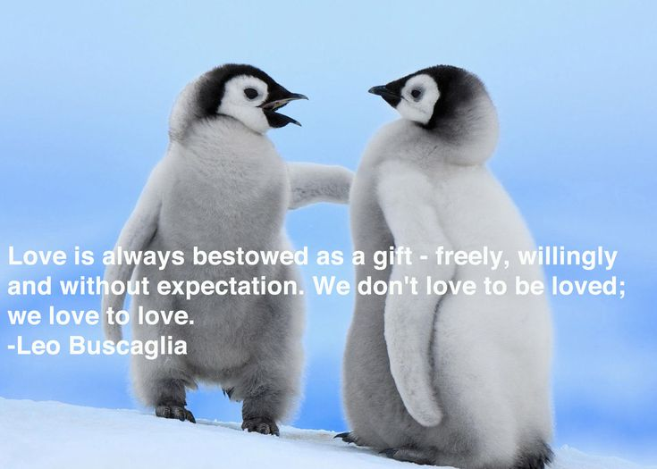 Best Penguins Images On Pinterest Penguin Love Penguin - Penguin in japan happily walks to local fish market everyday for lunch