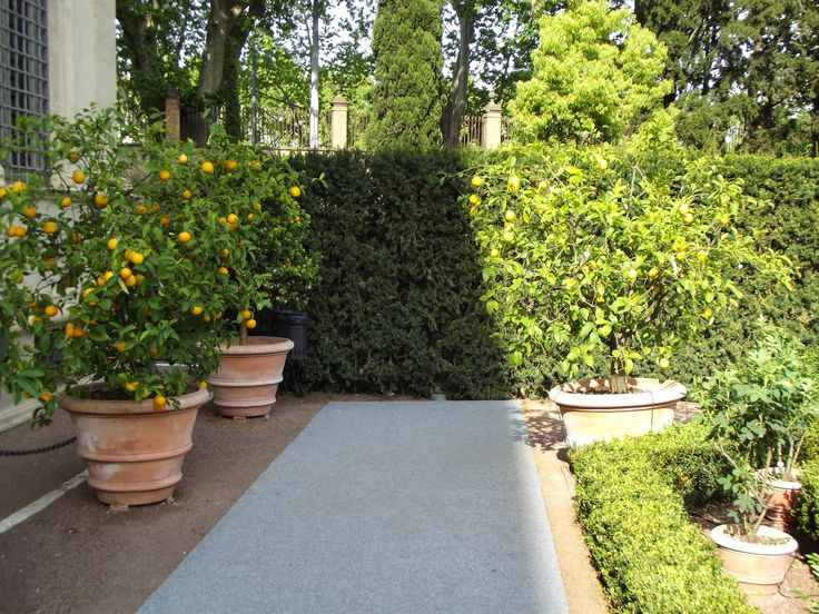 The Italian Renaissance of the botanical gardens  http://erbeitalianskincare.blogspot.it/2014/05/the-italian-corridor-leading-us-towards.html