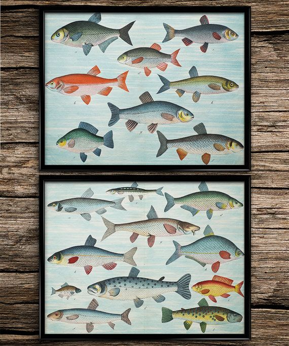 Poisson cru définie Vintage Prints | Impressions nautiques | Home decoration | Decor de bureau | Sticker imprimable | Sticker Vintage |