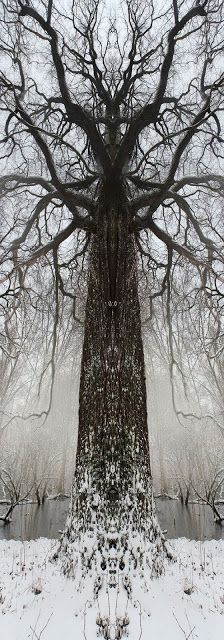 Druids Trees:  #Totem-trees. | The Druid's Grove
