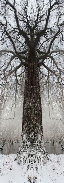 Druids Trees:  #Totem-trees.   The Druid's Grove