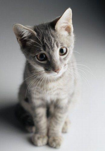Kleine Tierkinder, große Augen - Kleine Tierkinder, große Augen, jetzt auf bildderfrau.de, #tierkinder  http://www.bildderfrau.de/familie-leben/album835136/kleine-tierkinder-grosse-augen-0.html