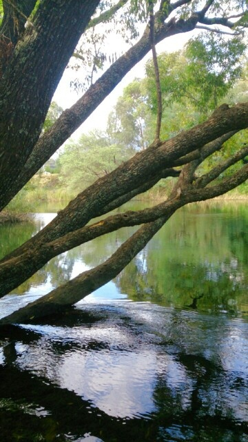 Goulburn River, Lake Eildon VIC