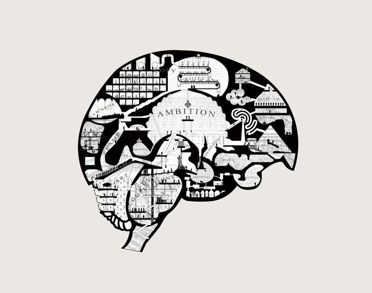 The Architects Brain