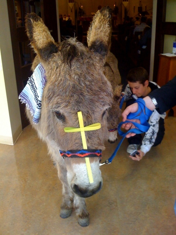 What do I love best about leading church school? Bringing the donkeys into the sanctuary at Christmas and Palm Sunday.