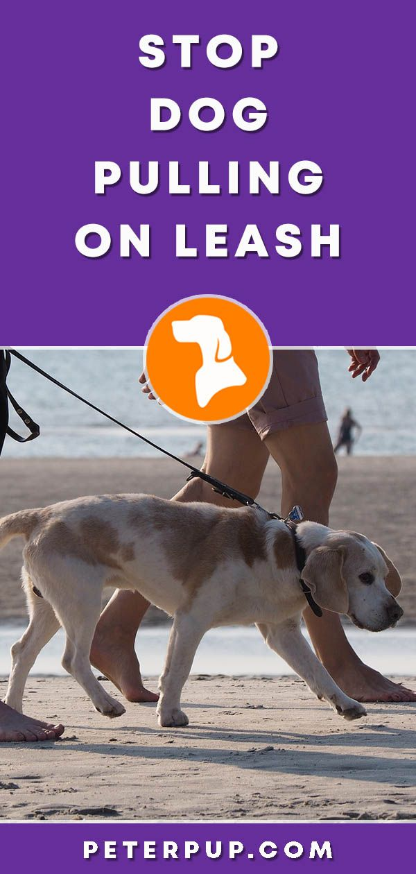 How To Stop If Your Dog Is Pulling On Leash Dog Training Dog