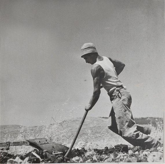 Artwork by Robert Capa, A French Jew Cultivating, Near Jerusalem, Made of Vintage print