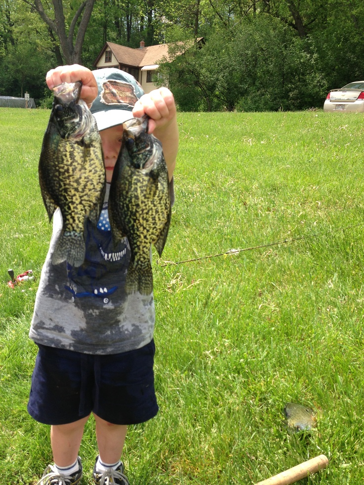 Crappies crappie pinterest crappie fishing fishing for Crappie fishing secrets
