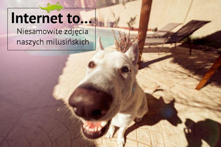 Internet to... Niesamowite zdjęcia naszych milusińskich. #Pies #Internet