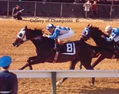 Kauai King- 1966 Kentucky Derby and Preakness winner