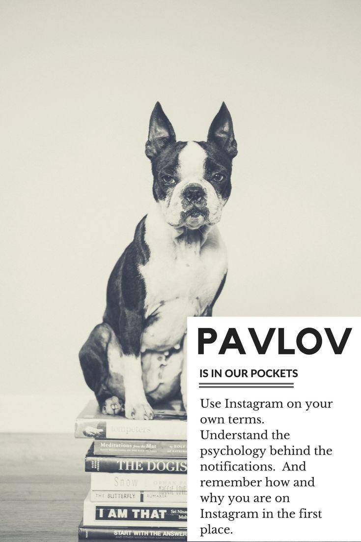 Pavlov And Instagram Instagram Instagram Tips Like Instagram