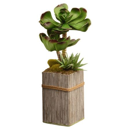 Add a Southwestern touch to your entryway or living room with this faux succulent selection, nestled into a fence-style planter.  Pr...