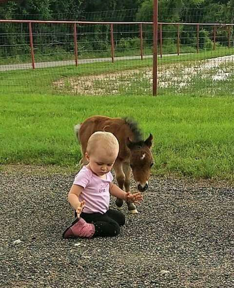Start'em young. Little miniature horse and baby, sweet!
