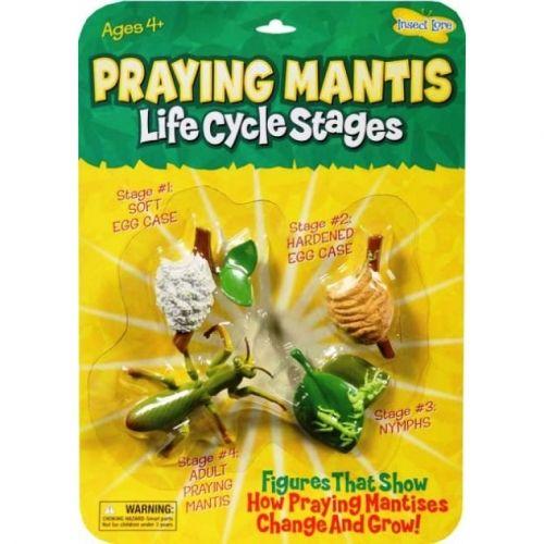 Praying Mantis Life Cycle Stage Figures - Life Cycle of a Praying Mantis