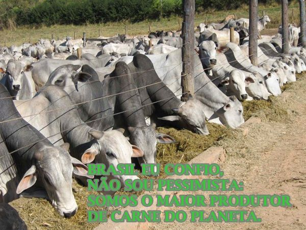 Brasil, eu confio, não sou pessimista