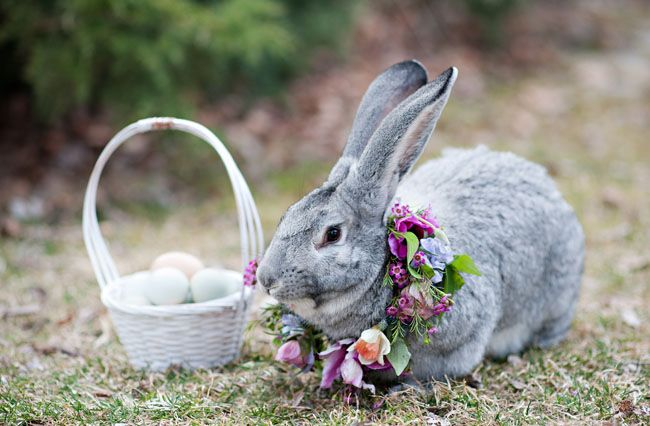 Real Pictures Of The Easter Bunny