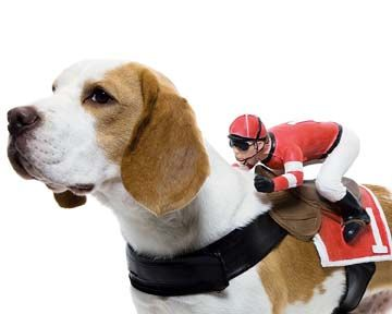 jockey dog costume diy - Dogs With Halloween Costumes On