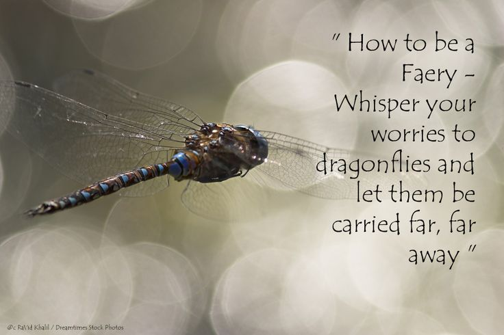 How to be a Faery. #Arach #Fantasy #Faery  #dragonflies