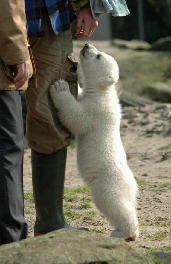 polar bear (: furry-friends