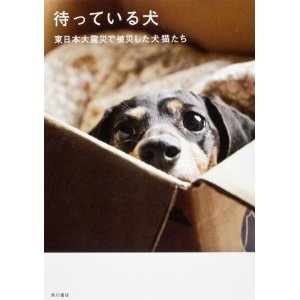 待っている犬  東日本大震災で被災した犬猫たち:::出版社: 角川書店 (2012/2/25):::飼い主の死亡も知らず、倒壊した自宅から動かない犬。避難所に一緒に入所できず、半壊の自宅で犬と一緒に暮らす飼い主。救援活動のために入った被災地で、そうした犬猫たちを保護し治療し世界をしながら、飼い主たちの迎えを一緒に待つ、仙台のドッグショップのスタッフとボランティアたち。これは彼らが撮った、被災した人と動物の記録写真集です。