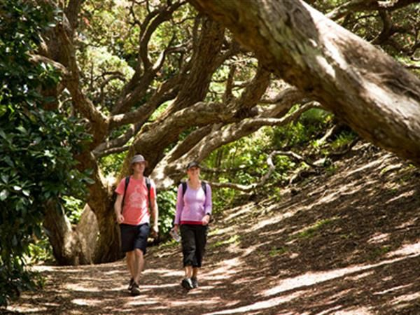 Walk under ancient trees in New Zealand's West Coast on a shore excursion