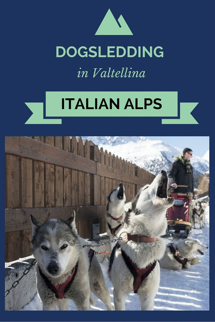Did you know you can go dog sledding in the Italian Alps? Arnoga in Valtellina is the place for you! Read this article to find out many fun things to do in Valtellina!