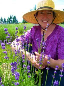 Seafoam Lavender Farm