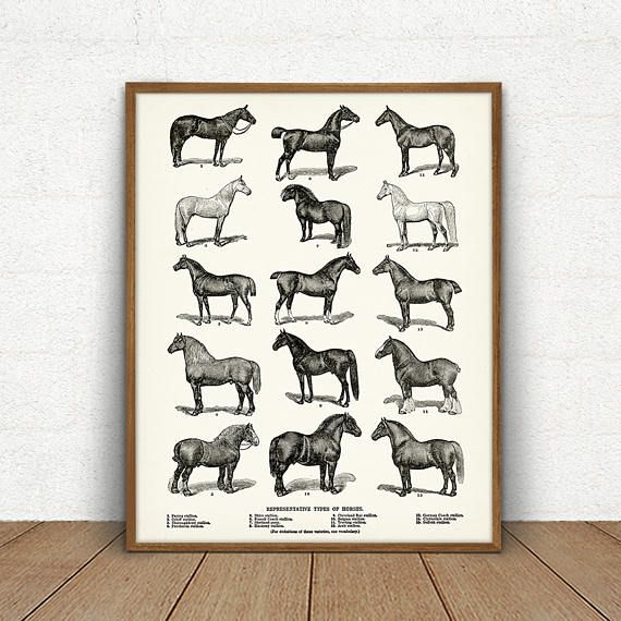 Horse Breeds Printable, Types of Horses, Equestrian Horse Art, Horse Wall Decor, Horse Print, Horse Chart, Horse Poster Print Download Image
