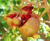 Wahre Vitaminbomben - exotische Früchte
