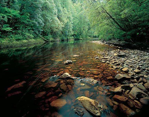 Rainforest exploring – Tarkine, Tasmania #CheapflightsGG