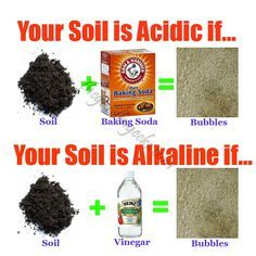 How to Test your soil at Home