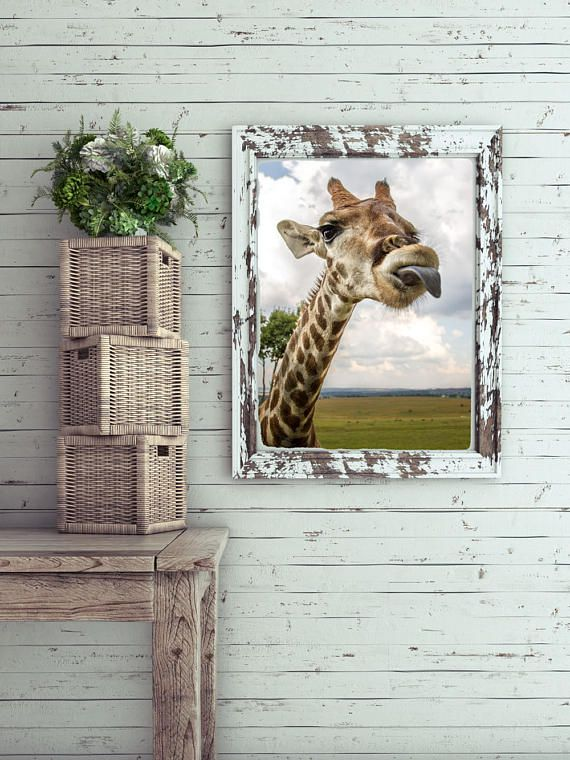Printable Wall Art - I'm gonna tell my mom on you, Wildlife, Giraffe, South Africa