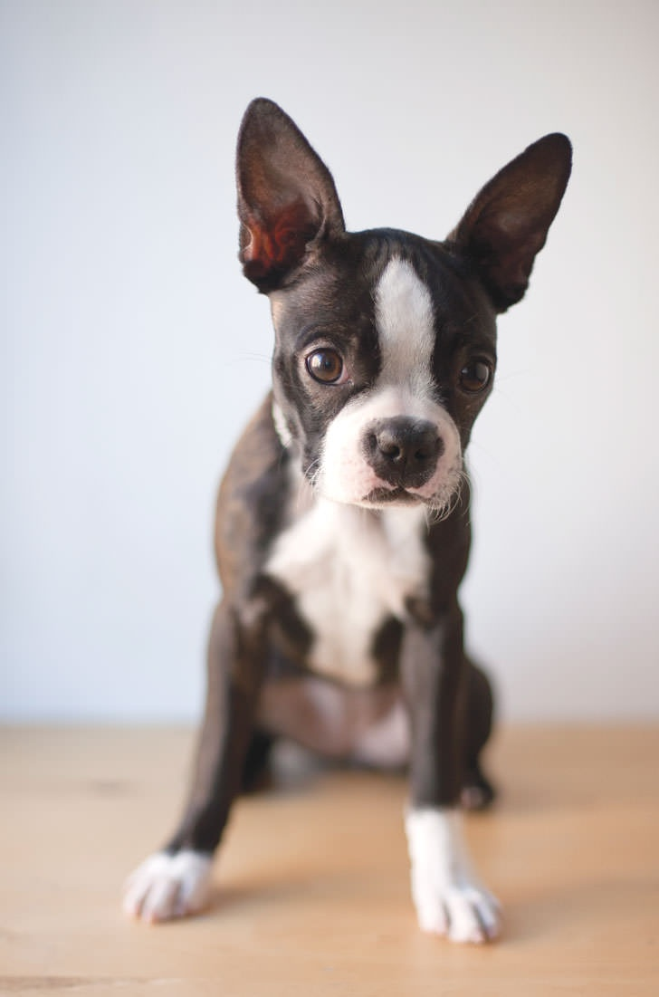 8 best Comportement animal images on Pinterest | Behavior